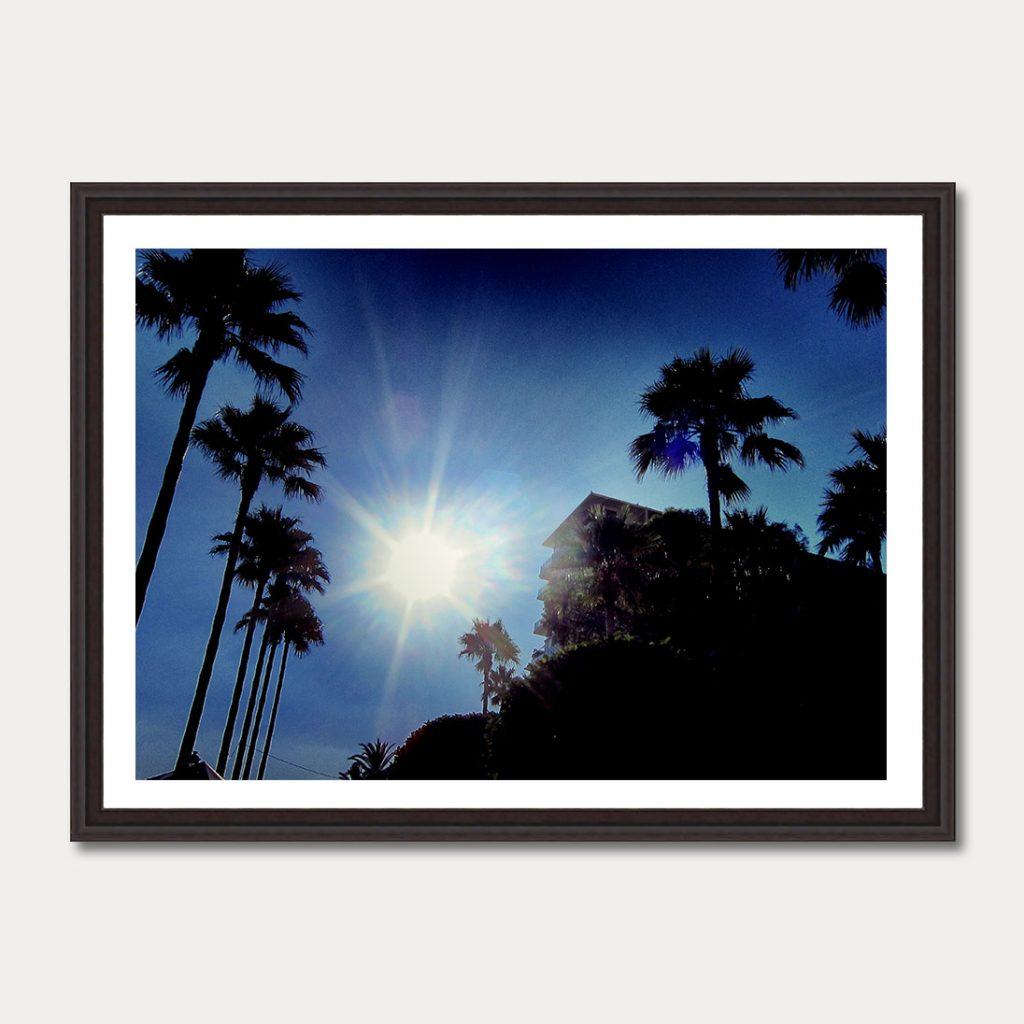 palmtrees6
