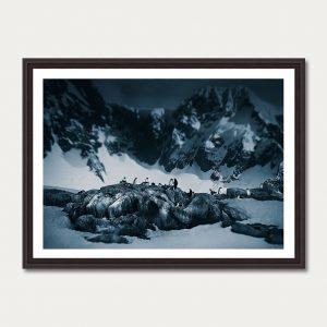 PhotoArtGallery Antarctica Iwein Maassen 7
