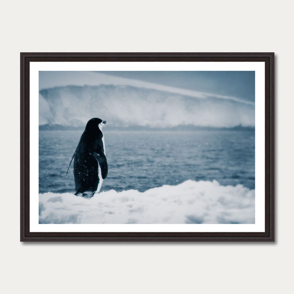 photoartgallery-antarctica-9