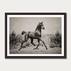 PhotoArtGallery Horses Robert Peek 2