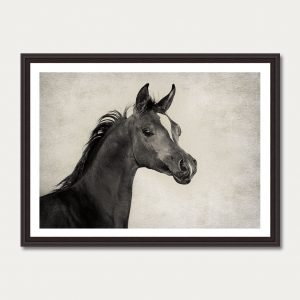 PhotoArtGallery Horses Robert Peek 3