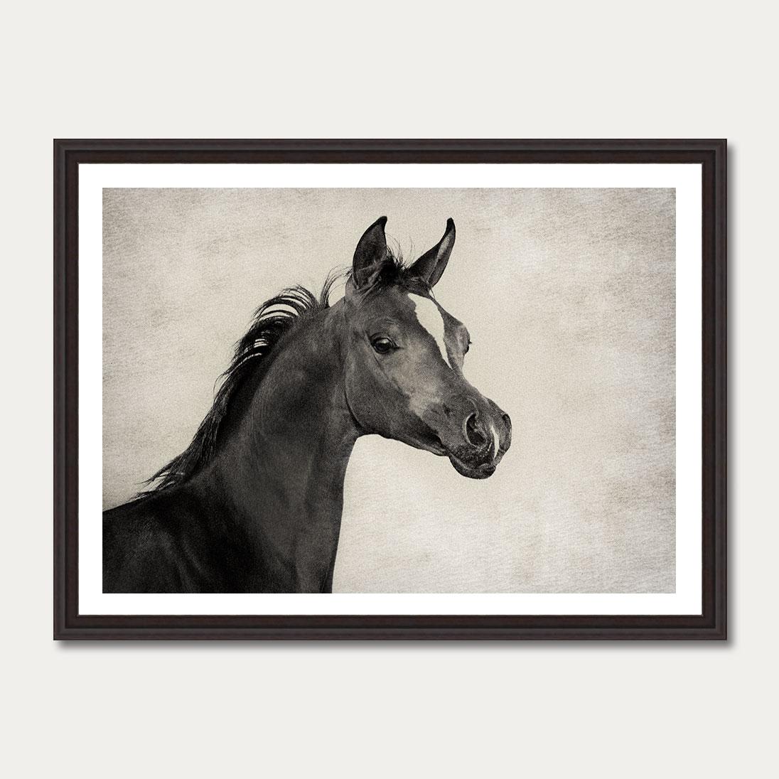 PhotoArtGallery Horses Robert Peek 3