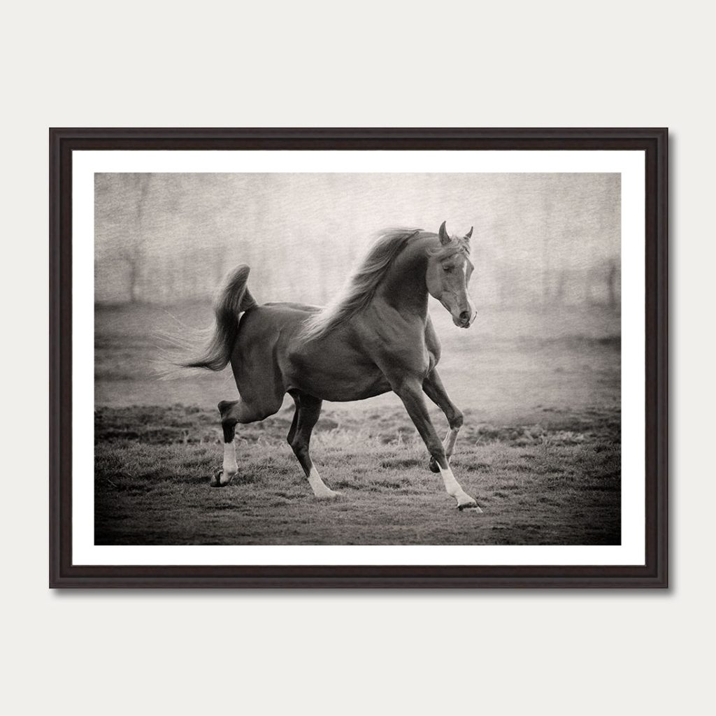 photoartgallery-robert-peek-animals4
