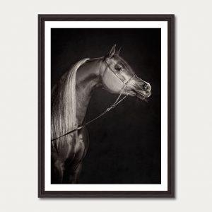 PhotoArtGallery Horses Robert Peek 6