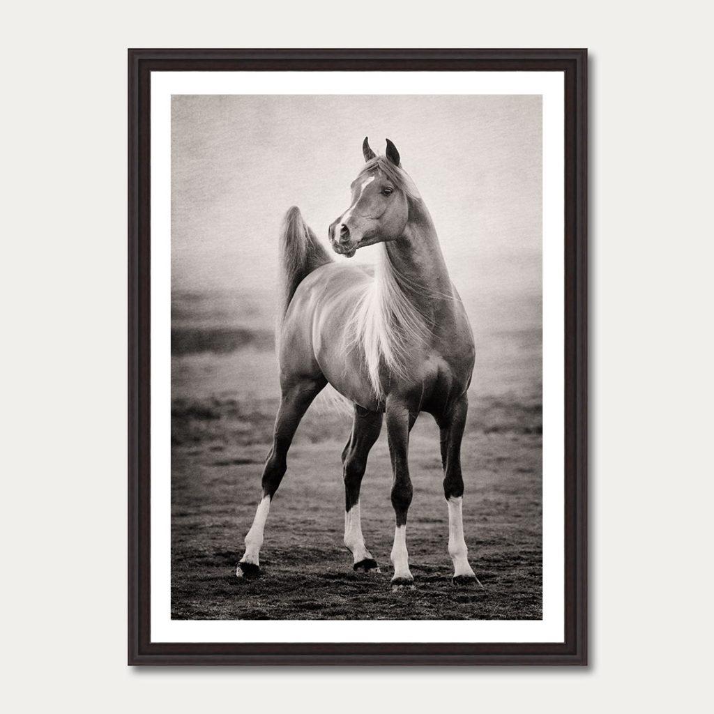 photoartgallery-robert-peek-animals8