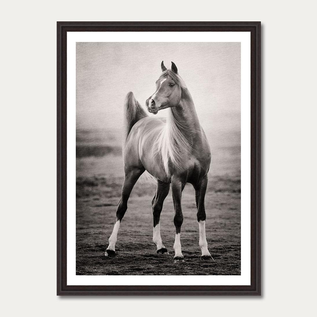 PhotoArtGallery Horses Robert Peek 8