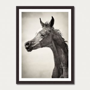 PhotoArtGallery Horses Robert Peek 9