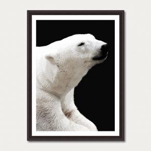 Photo Art Gallery animals 3