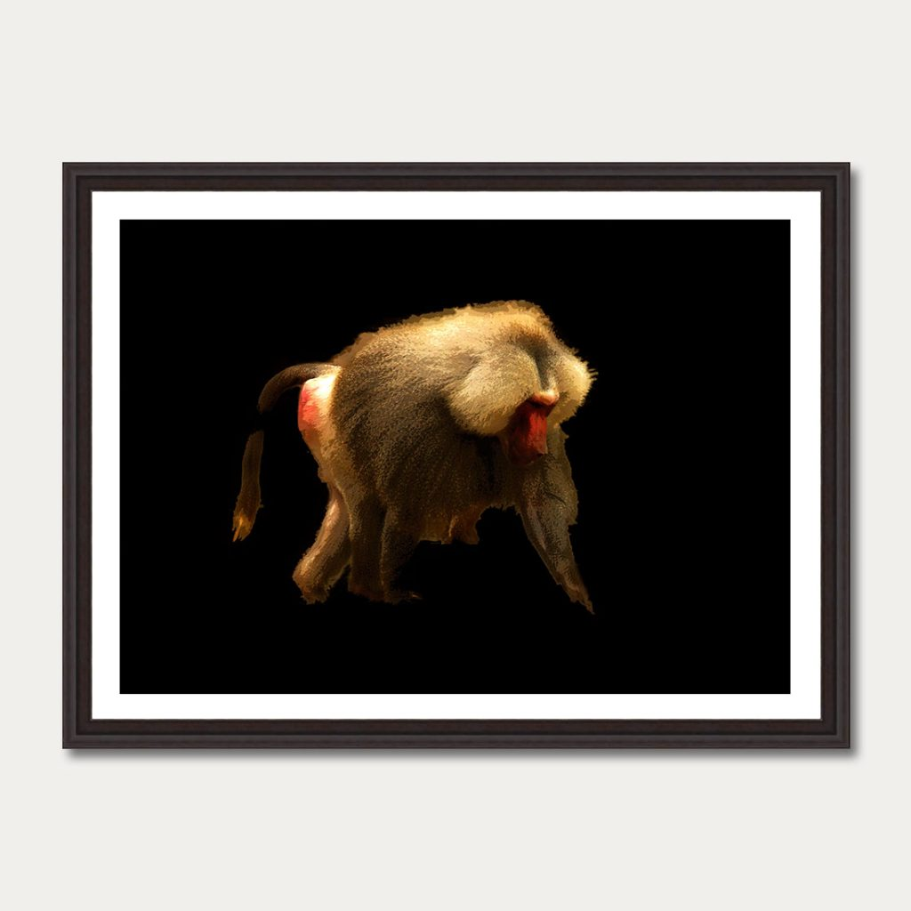 photoartgallery-animals-6