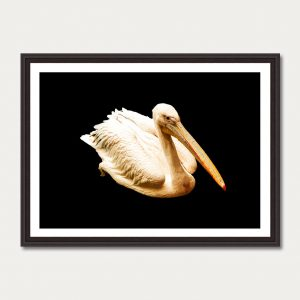 Photo Art Gallery animals 4