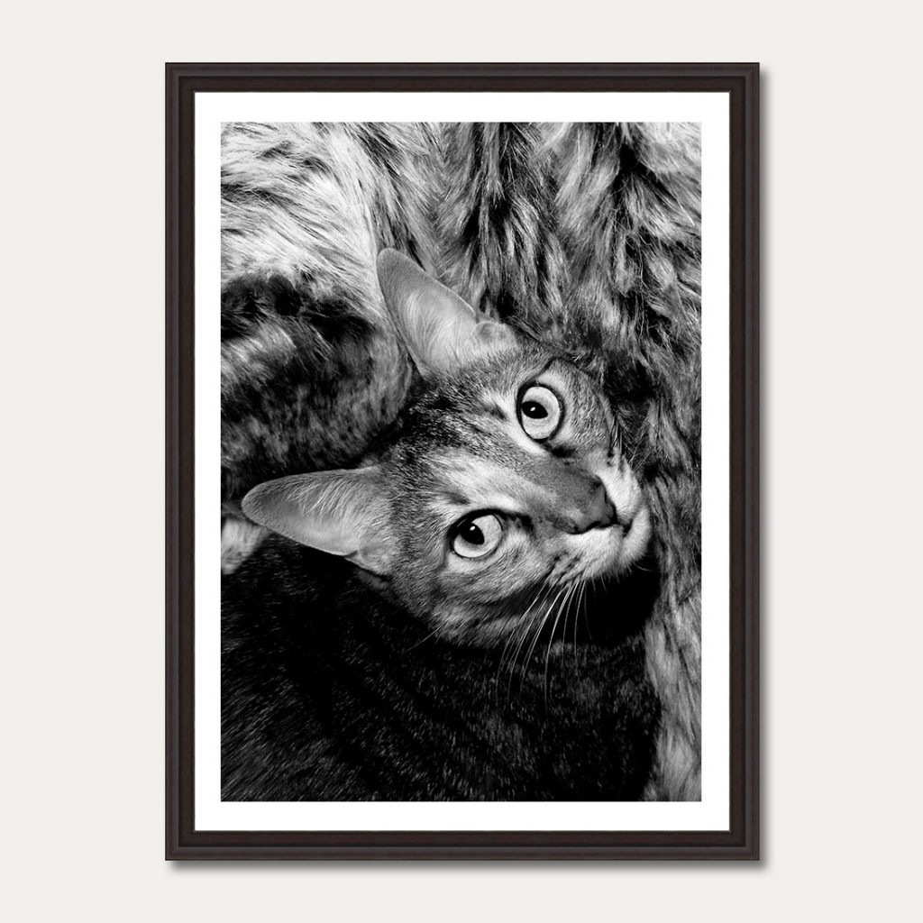 photo-art-gallery-cat-3